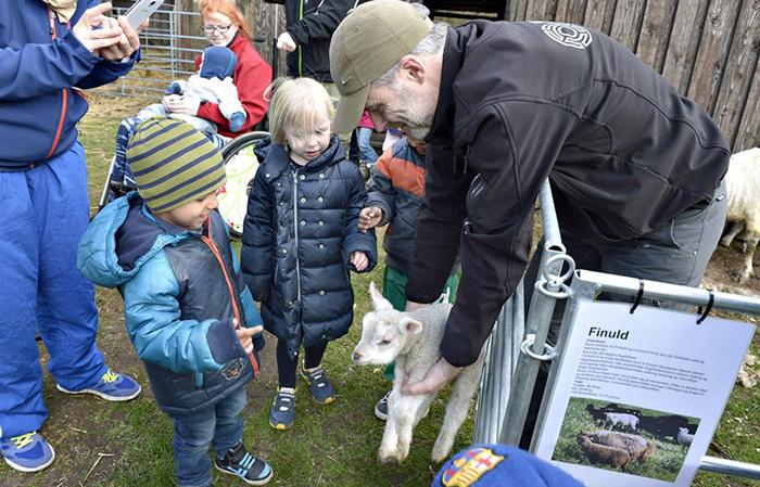 VHM Landskabs og landbrugsmuseet - Får uld